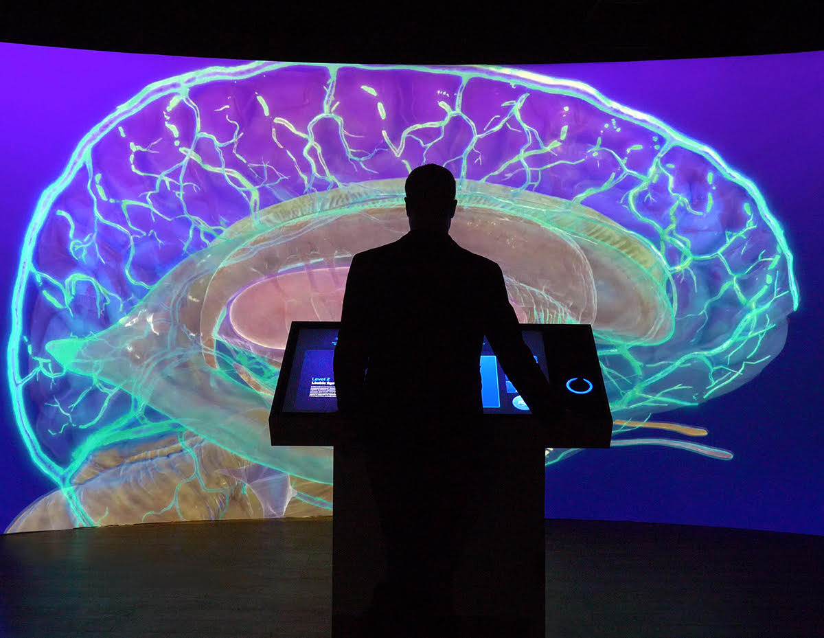 Image of human brain projected on concave wall.