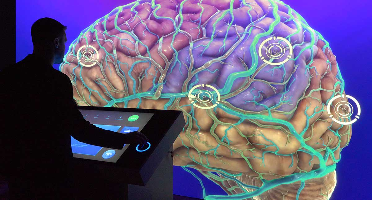 Close up shot of visitor using touch screen to control large display of colorful brain imagery.
